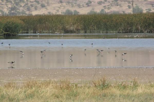 Seremi RM forma Mesa de Protección de Humedal de Batuco
