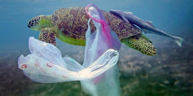 47bdae1b3 Comisión de Medio Ambiente del Senado aprobó por unanimidad indicación  sustitutiva que prohíbe la entrega de bolsas plásticas de comercio en todo  Chile